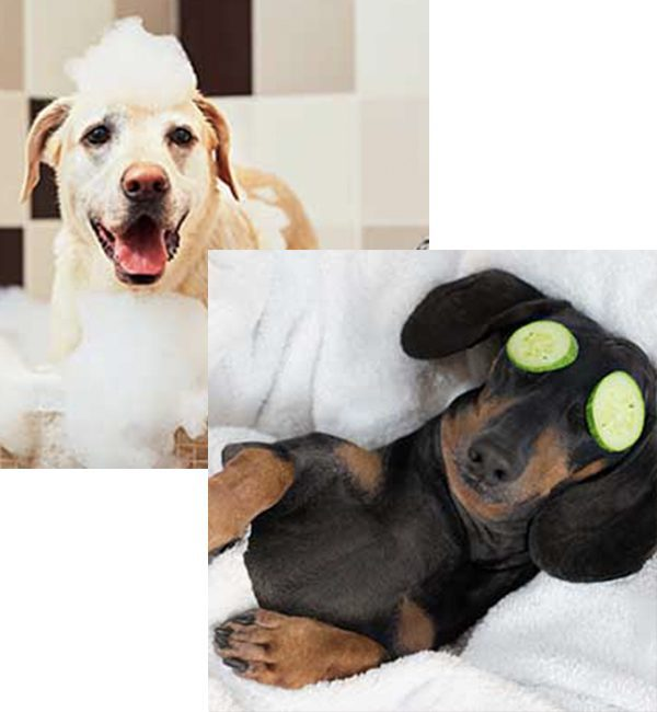 Dog Conditioner