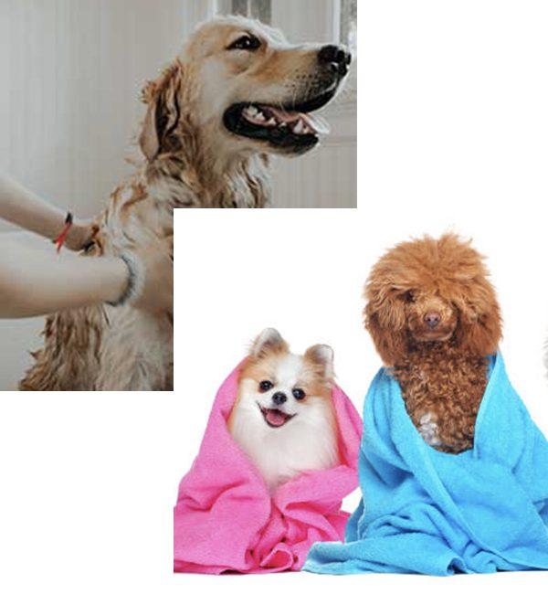 Dog Deoderizer