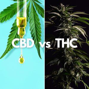 Hemp, CBD and Drug Tests 2